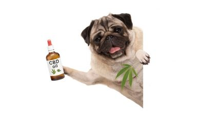 Photo of How CBD can Help your Dog, Cat or Pet